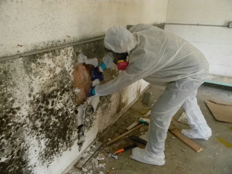 Mold Removal Chemical Mask Dry Wall