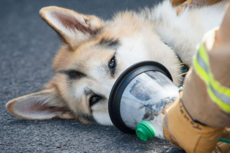 Oxygen For Dogs At Home